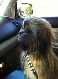 the force.jpg