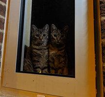 kittles.jpg
